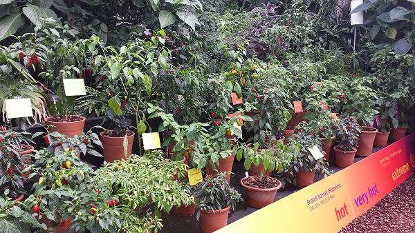 pepers at the spice festival Kew Gardens